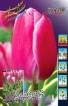Тюльпан Андорра