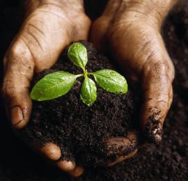 Плодородие почвы: как сберечь и улучшить