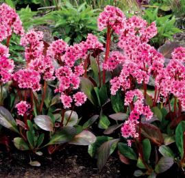 Лучшие декоративные растения для глинистой почвы