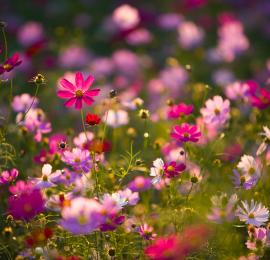 Неприхотливые цветущие растения для  сада