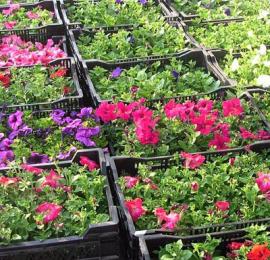 Ожидаем поступление цветов осенней посадки