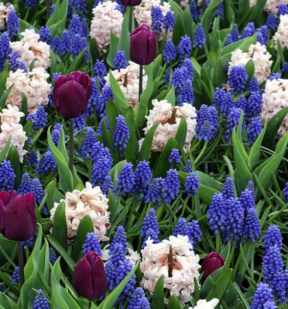 Садовая коллекция цветов