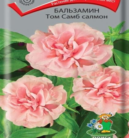 Бальзамин Том Самб салмон