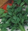 Сельдерей листовой Бодрость(ч/б)