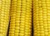 Кукуруза Ранняя лакомка сахарная 121