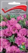 годеция крупноцветковая Катлея