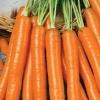 Морковь Амстердамска(ч/б)