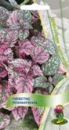 Гипестис Розовая вуаль