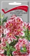 годеция крупноцветковая Рембранд