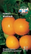 томат Жираф