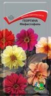 георгина Мефистофель