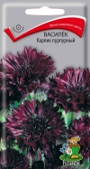 василек Карлик пурпурный