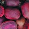 Актинидия аргута Пурпурна Садовая