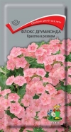 Флокс друммонда Красотка в розовом